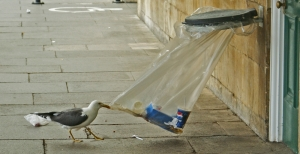 gabbiano-con-rifiuti